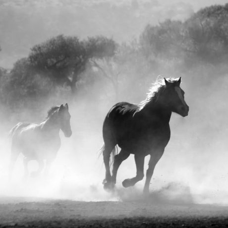 Running horses representing speed and performence